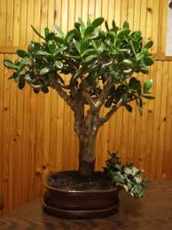 Plants In Bathroom Feng Shui by Feng Shui Plants And Flowers 1 3 Xiaoming U0027s Goodwill Feng Shui