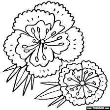 Sweet William Flower Coloring Page
