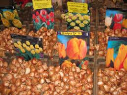 market manila bloemenmarkt amsterdam flowers