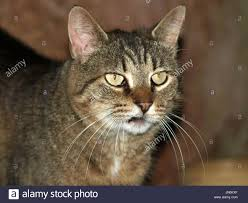 Outdoor Barn Cat Close Up Face With Crooked Mouth And Full ... Barn Venue In Georgia Weddings Receptions Rustic Wedding Bailey Elle Photographysneak Peek Crooked Road Kara Crooked Barn Rock Hills Ranch The At Pines Farm Old With Door Finland Stock Photo Royalty Free River National Grassland Or Photos Images Alamy Mcc Creek Lodging