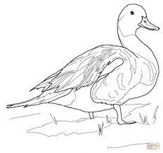 Male And Female Mallard Ducks Coloring Page Printable Mandarin Duck Large Animal