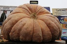 Largest Pumpkin Contest Winners by Photos Record Breaking Pumpkin Wins Half Moon Bay Weigh Off