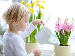 pflanzen im kinderzimmer giftig oder unbedenklich grüne