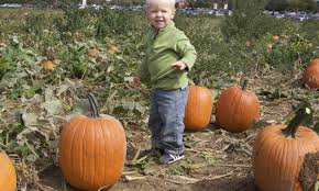 Local Pumpkin Patches Dayton Ohio by Pick Your Own Pumpkins Young U0027s Jersey Dairy