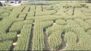 Portland Pumpkin Patch Corn Maze by Fox 12 Covers The Original Maize Portland Oregon Youtube