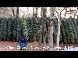 Fraser Fir Christmas Trees Nc by Fraser Fir Christmas Trees At Wingard U0027s Market Youtube