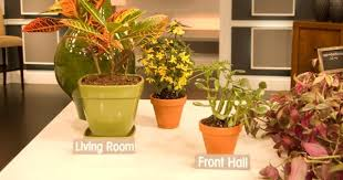 Plants In Bathroom Good For Feng Shui by Feng Shui Says This Plant At Right Place Is Key To Brings Good