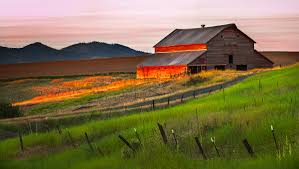 Evening Barn | Washington's Wheat Life Book Scary Dairy Barn 2 By Puresoulphotography On Deviantart Art Prints Lovely Wall For Your Farmhouse Decor 14 Stunning Photographs That Might Inspire A Weekend Drive In Mayowood Stone Fall Wedding Minnesota Photographer Memory Montage Otography Blog Sarah Dan Wolcott Oregon Rustic Decor Red Photography Doors Photo 5x7 Signed Print The Briars Wedding Franklin Tn Phil Savage Charming Wisconsin Farmhouse Sugarland Upcoming Orchid Minisessions Atlanta Child