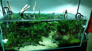 Nature Aquascape - YouTube Aquascaping Nature Aquariums Of Zoobotanica 2013 Youtube Aquascape The Month November 2009 Riverbank Aquascaping Style Part 5 Roots By Papanikolas Nikos Awards Aquascapes Lab Tutorial River Bottom Natural Aquarium Plants The Planted Tank 40 Gallon Aquarium Everything About Incredible Undwater Art Cube Tanks Aquariums Dutch Vs How To A Low Tech Part 1