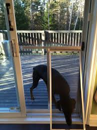 Best Pet Doors For Patio Doors by Best 25 Dog Screen Door Ideas On Pinterest Nursery Nursery
