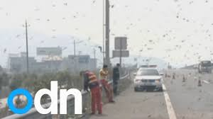 Millions Of Bees Swarm On Chinese Motorway After Truck Crash - YouTube 1979 Chevy Silverado K20 Gmc Pickup Frontal Crash Test By Nhtsa Coke Truck Accident Youtube Caught On Video Semi Goes Airborne Erupts Into Fireball In Indiana Lego City 2017 Stunt Truck Lets Build 60146traffic Car Smashes Overpass Most Insane Crashes Compilation 8 Dash Cam Video Shows Horrific High Speed Crash Watch News Videos 2 Killed When Crashes Tree Along I80 Trucker Jukebox On I12 Louisiana 3 Rc Radio Control Bashing Hits Funny Accident In India Livestock I75