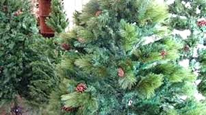 Most Realistic Artificial Christmas Tree Platinum