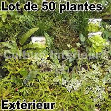 pour mur exterieur lot de 50 plantes pour mur végétal extérieur matériel mur végétal fr
