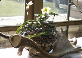 dresden floristik tischdekoration zur jagd winter frühjahr