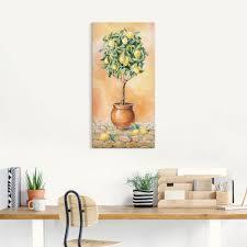 zitronenbaum i viele produktarten größen