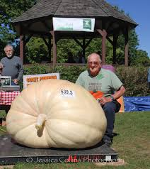 Pumpkin Patch Ct by Danbury Pumpkin Grower Takes Home Prizes In Ridgefield U0027s Giant