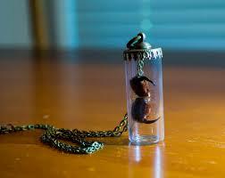 Do Tarantulas Shed Their Fangs by Real Tarantula Fangs Glass Vial Necklace