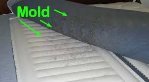 Sleep Number Bed Mold Problems