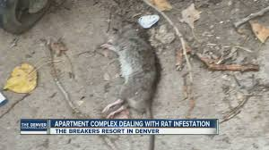 100 Mouse Apartment Complex Dealing With Rat Infestation