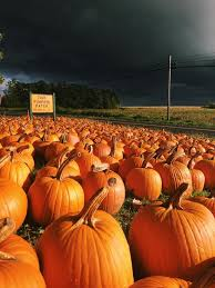 Southern Ohio Pumpkin Patches by Tim U0027s Pumpkin Patch Home Facebook