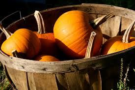 Pumpkin Seeds Prostate Cancer by Pumpkins Improve Prostate Health Huffpost