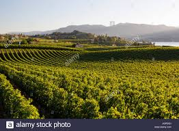 100 Naramata Houses For Sale Winery And Vineyards On The Bench In Penticton