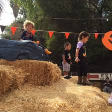 Tapia Brothers Pumpkin Patch by Tapia Brothers Halloween Pumpkin Patch Returns Encino