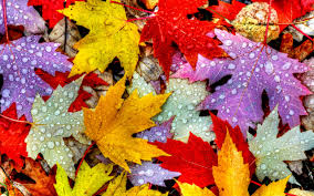 Colorful Leaves Drops Wallpaper