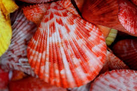 Color Shells Photograph By Julia Fine Art And Photography