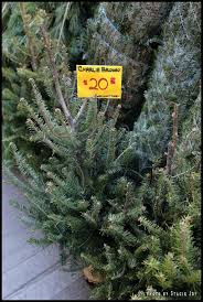 Charlie Brown Christmas Tree Cvs by Ev Grieve So You Want To Buy A Tree For The Holidays In The East