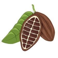Coffee Plant Clipart Cocoa Bean 6