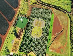The world s most incredible mazes include hedgerows shaped like