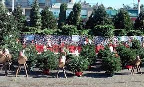 Christmas Tree Shop So Portland Maine by Where To Find A Christmas Tree In Los Angeles