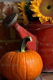 Pumpkin Patch Fresno Ca First News by 3954 Best Fall And Halloween Images On Pinterest Halloween Diy