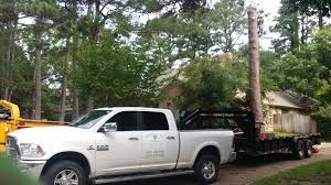 The Shed Edom Tx by Rodriguez Tree Service Photo Gallery Tyler Tx