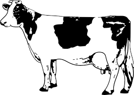 Cow Coloring Pages 3