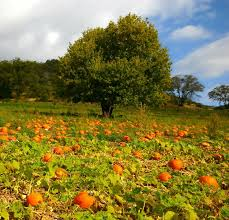 Cahuenga And Riverside Pumpkin Patch by 60 Best Mystory In History Images On Pinterest Southern