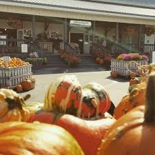 Pumpkin Patch Columbus Wi by Skelly U0027s Farm Market Home Facebook