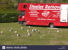 100 Seabirds Food Truck Lesser Black Backed Gulls Cleaning Up Left Over Food Scraps