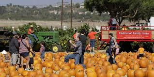 Underwood Pumpkin Patch Moorpark by Gdp Report Casts Negative Shadow Over Ventura County