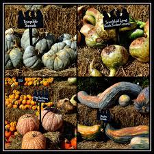 Types Of Pumpkins And Squash by Pumpkins Squash U0026 Gourds