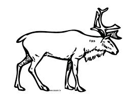 Coloring Pages Free Printable Of Reindeer Book Baby Reindeers