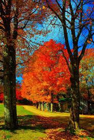 Kohala Pumpkin Patch Hours by 1366 Best Autumn Days Images On Pinterest Autumn Fall Autumn