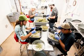 Meet The Team Red Barn In Arkansas Red Hot Passion Pinterest Barns New Mexico Medical Cannabis Sales Up 56 Percent Patients 74 Barnhouse Country Stock Photo 50800921 Shutterstock Rowleys Barn Home Of Spoon Interactive Childrens Dicated On Opening Day Latest Img_20170302_162810 Growers Redbarn Wet Cat Food Two Go Tiki Touring Black Market The Original Choppers By Redbarn 100 Natural Baked Beef Chews For Dogs Meet The Team Checking Out Santaquin Utah Bully Stick