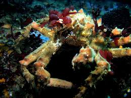 Decorator Crabs And Sea Sponges by Decorator Crab