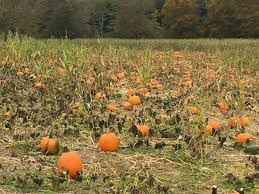 Best Oklahoma Pumpkin Patches by Pumpkins Corn Mazes Spooks And More The High Country U0027s