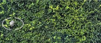 BAMBOO FENCE TEXTURES SEAMLESS GREEN HEDGE