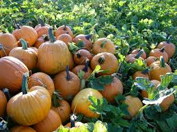 Pumpkin Picking Farms In Maryland by Deep Run Farms Featured In Usda Blog Pumpkin Patch Maryland