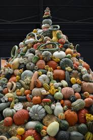 Types Of Pumpkins And Squash by 39 Best Pumpkins Images On Pinterest Food Carving Halloween