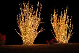 Tumbleweed Christmas Trees by 8 Regional Alternatives To Christmas Trees Mental Floss